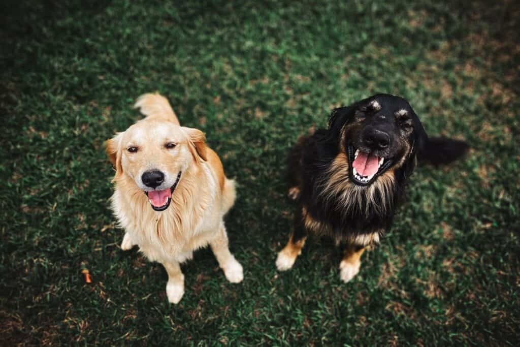 Dog hair loss- Two dogs