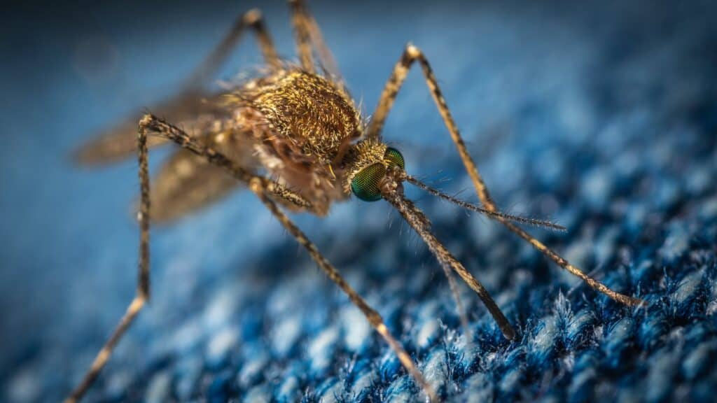 Getting rid of mosquitoes- mosquito
